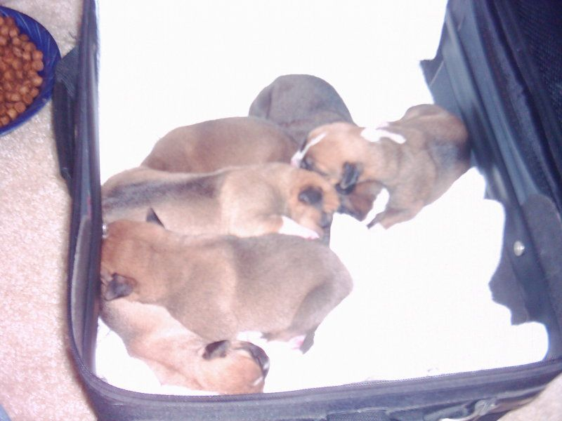 puppies-day-4_b.jpg